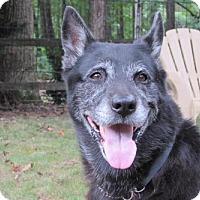 Adopt A Pet :: ELLA BELLA - Williston Park, NY