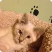 Adopt A Pet :: Levi - Bridgeton, MO