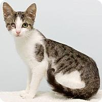 Adopt A Pet :: Twiggy - Montclair, NJ