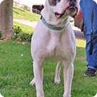 Adopt A Pet :: Duke - Chantilly, VA