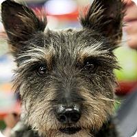 Adopt A Pet :: Zing - Tijeras, NM
