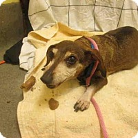 Adopt A Pet :: SABLE - Upper Marlboro, MD