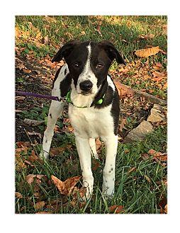 Terrier (Unknown Type, Medium) Mix Puppy for adoption in LaGrange, Kentucky - NEMO