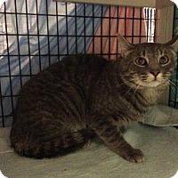 Adopt A Pet :: Gump - Janesville, WI