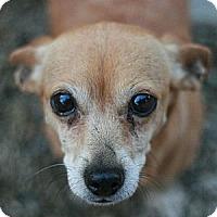 Adopt A Pet :: Bonnie - Canoga Park, CA