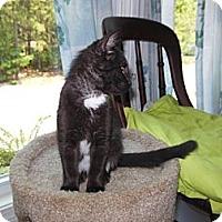 Adopt A Pet :: Talia - CARVER, MA