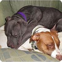 Adopt A Pet :: Milton - Reisterstown, MD
