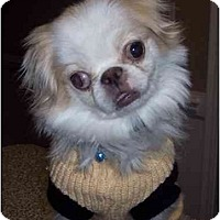 Adopt A Pet :: Kiko - Mays Landing, NJ