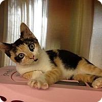 Adopt A Pet :: Angie - Secaucus, NJ