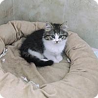 Adopt A Pet :: Prissy - Harrisburg, NC