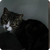 Adopt A Pet :: Evans - Colorado Springs, CO