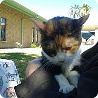 Adopt A Pet :: Trinity - Phoenix, AZ