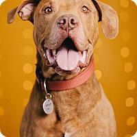 Adopt A Pet :: Doug - Portland, OR