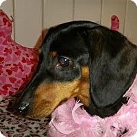 Adopt A Pet :: Bella - Marcellus, MI