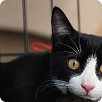 Adopt A Pet :: Niko - Woodland, CA