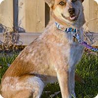 Adopt A Pet :: Cleo - Delano, MN