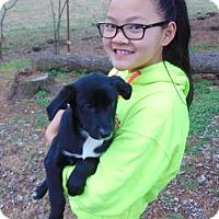 Adopt A Pet :: Amara - Greeneville, TN