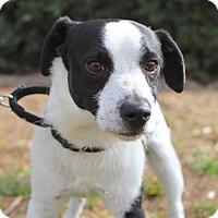 Adopt A Pet :: Giuseppe - San Diego, CA