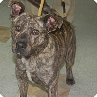 Adopt A Pet :: Margo - Brooklyn, NY