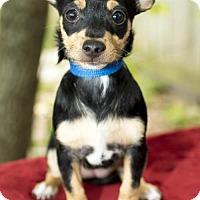 Adopt A Pet :: Ruby Nanette pup w/video - Alvin, TX