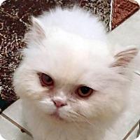 Adopt A Pet :: Winter - Toronto, ON