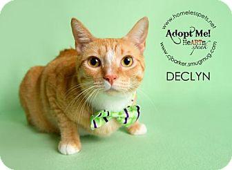 Domestic Shorthair Cat for adoption in Houston, Texas - Declyn