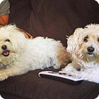 Adopt A Pet :: Beija and Angel - Oakhurst, NJ