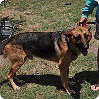 Adopt A Pet :: Romeo - Dripping Springs, TX