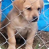 Adopt A Pet :: Finn - Waller, TX