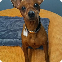 Adopt A Pet :: Kega in CT - Manchester, CT