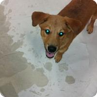 Adopt A Pet :: Square Dance - Harmony, Glocester, RI