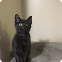 Adopt A Pet :: Emerald - Huntley, IL