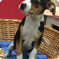 Adopt A Pet :: Miami - Decatur, AL