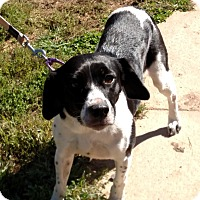 Adopt A Pet :: Naveah - Benton, PA