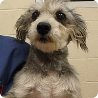 Terrier (Unknown Type, Medium)/Terrier (Unknown Type, Medium) Mix Dog for adoption in Apple Valley, California - Opa #161183