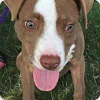 Adopt A Pet :: MILEY - Sandusky, OH