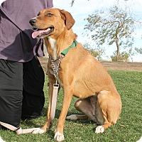 Adopt A Pet :: Christine - Ridgecrest, CA
