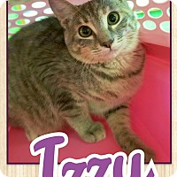 Adopt A Pet :: Izzy - Edwards AFB, CA