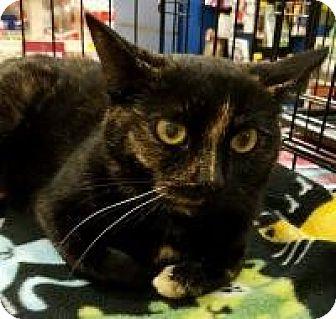 Domestic Shorthair Cat for adoption in Rochester, Michigan - Mia