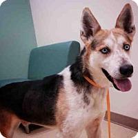 Adopt A Pet :: JAKE - Palmer, AK