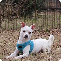 Adopt A Pet :: Luke - Warner Robins, GA
