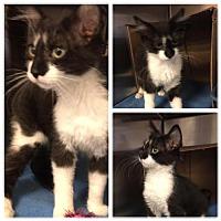 Adopt A Pet :: DEMI - Lawton, OK