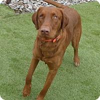 Adopt A Pet :: Buck & Gator - Towson, MD
