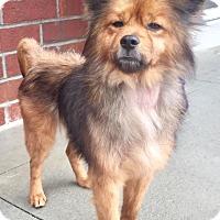 Adopt A Pet :: Rusty - Summerville, SC