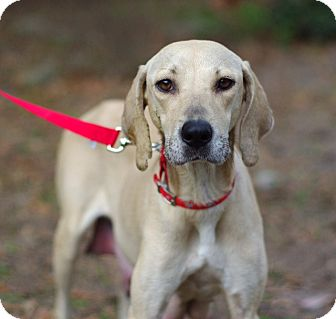 Hound (Unknown Type) Mix Dog for adoption in Gainesville, Florida - Olivia