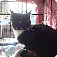 Adopt A Pet :: Tallulah - Brooklyn, NY