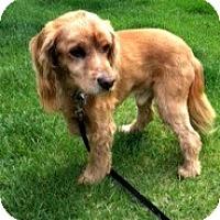 Adopt A Pet :: Sam - Evans, CO