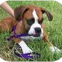 Adopt A Pet :: Scout - Thomasville, GA