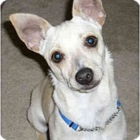 Adopt A Pet :: Romeo - Marysville, CA