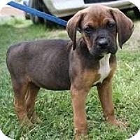 Adopt A Pet :: Willie - Staunton, VA